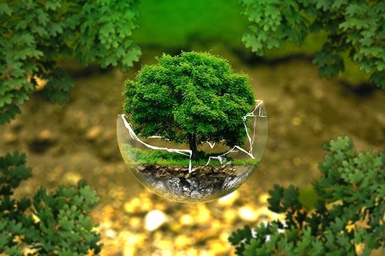 Что такое экология и для чего она нужна?