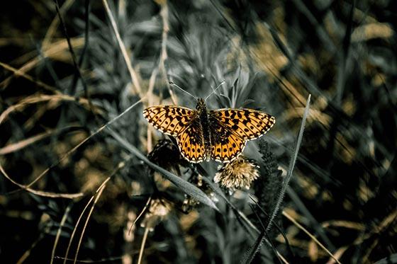 Биология. Бабочка