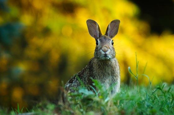 Кролик как элемент науки биология