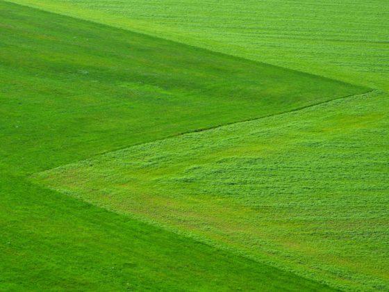 Почему трава зелёная?