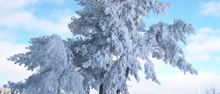 Зима. Снег и снежный покров