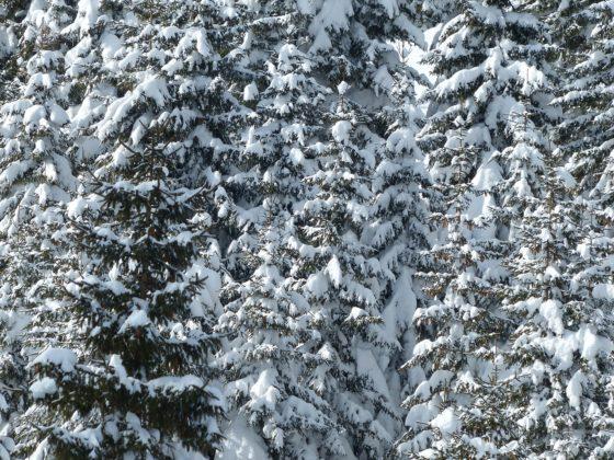 Почему снег хрустит под ногами?