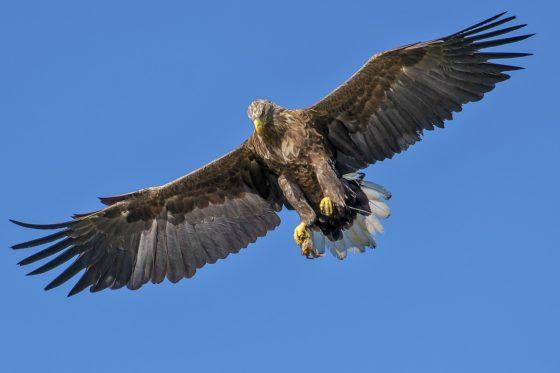 Почему птицы летают и не падают?