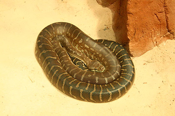 Десять самых ядовитых змей в мире