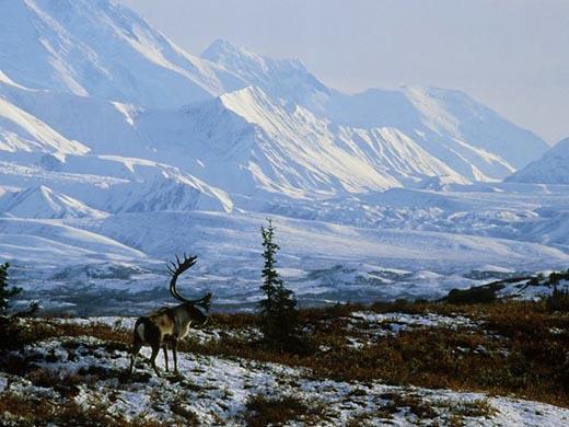 Кто и зачем продал Аляску Америке?