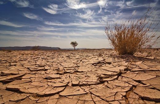 Что такое засуха и к чему она может привести?
