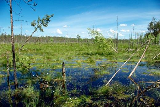 Что такое болото и чем оно полезно?