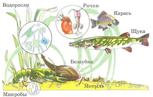 Что такое экосистема и из чего она состоит?