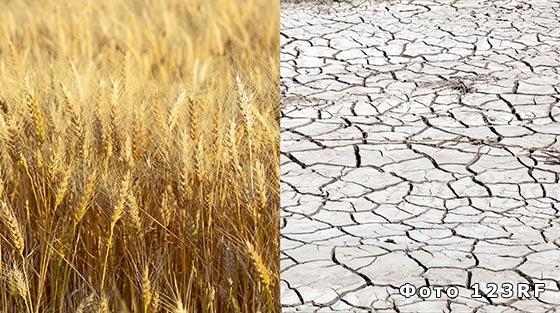 Распределение агроклиматических ресурсов в РФ