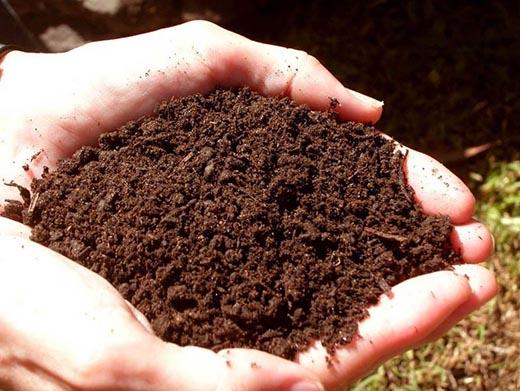 Что такое почва и из чего она состоит?