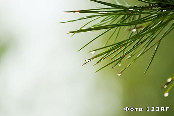 Что такое роса и как она образуется?