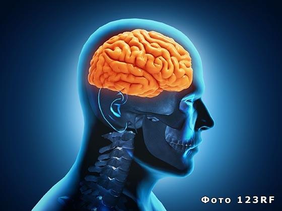 Что такое физиология и что она изучает?