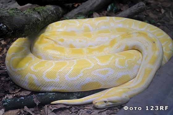 Пять самых больших змей в мире
