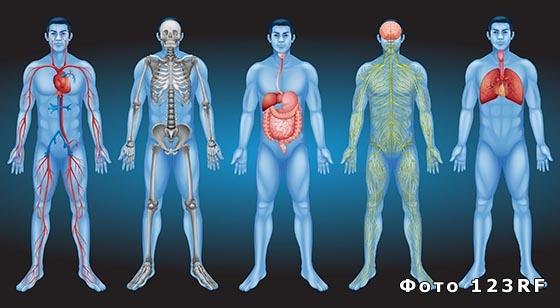 Что называют организмом в биологии?