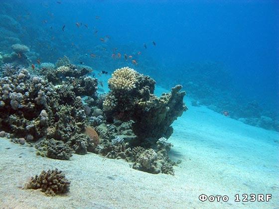 Что такое риф