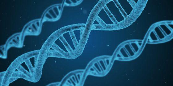 Что такое генная инженерия и что она изучает?