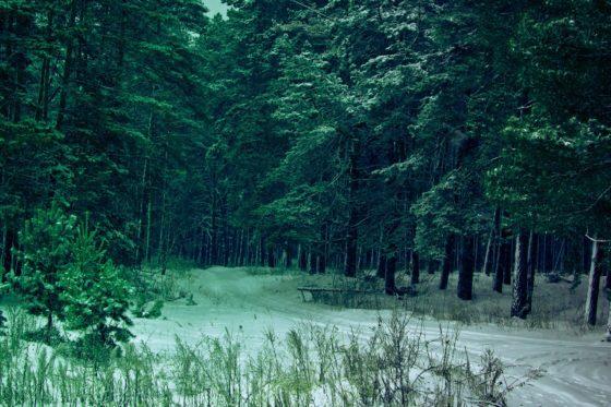 Что такое тайга и чем она отличается от тундры?