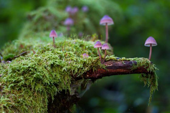 Что такое мох и где он растёт?