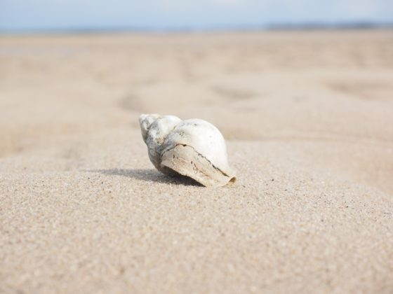 Что такое песок и каков его химический состав?