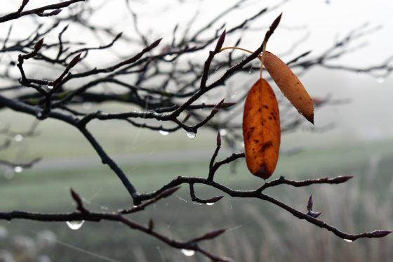 Что такое оттепель в природе?