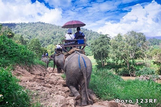 Сколько килограммов весит слон?