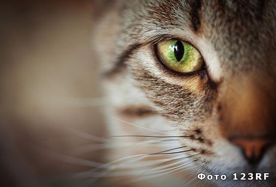 Почему кошка топчет лапками хозяина?