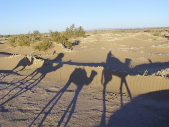 Какие растения и животные живут в пустыне