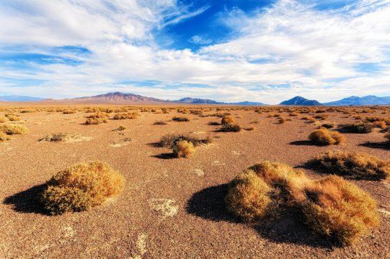 Что такое степь и кто там живёт?