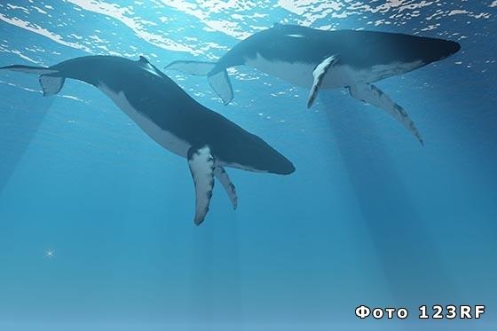 Сколько весит кит? Результаты взвешивания.