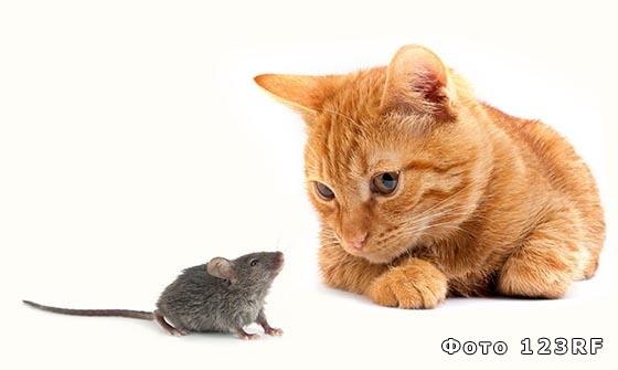 Зачем котам и мышам нужны хвосты
