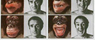 Почему современных человекообразных обезьян нельзя считать предками