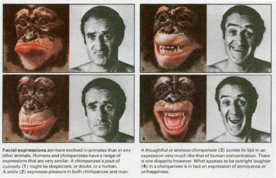 Отличие человека от человекообразных обезьян
