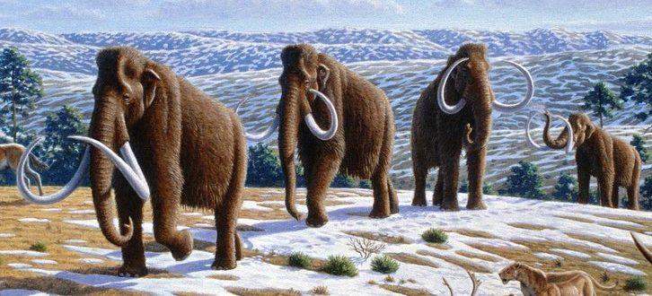 Топ 5 доисторических хищников ледникового периода Северной Америки