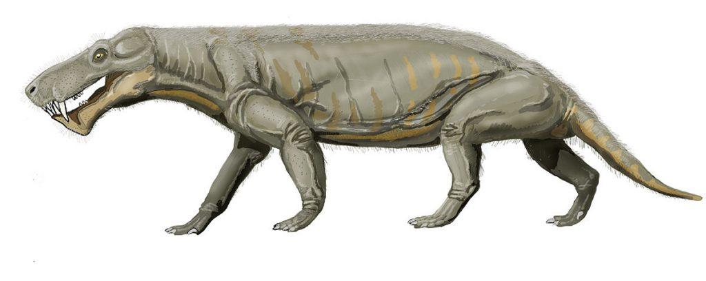 Размеры горгонопсов
