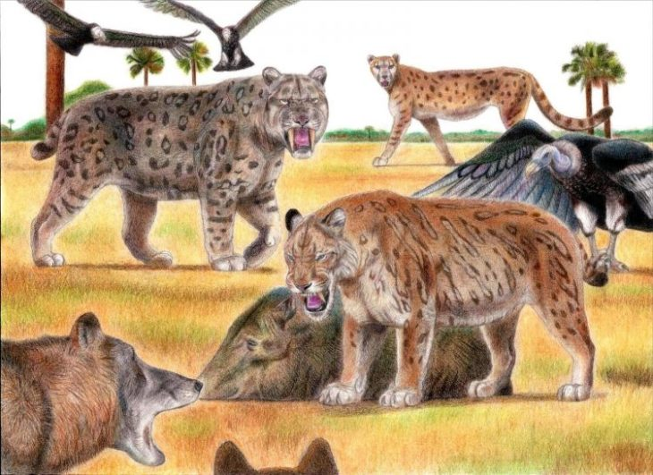 Мирациноникс: американский гепард