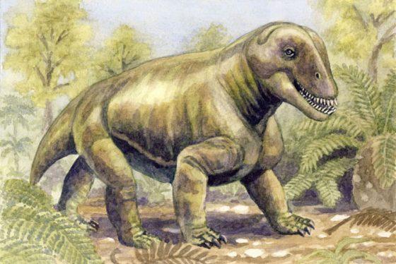 Телосложение антеозавров