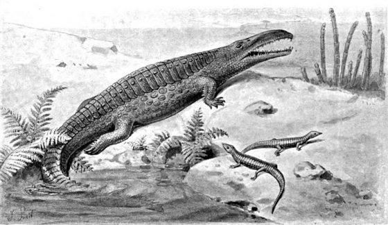 Белодон — еще одна доисторическая рептилия
