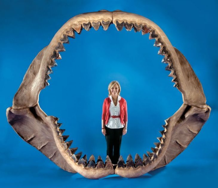 Окаменевшие зубы Мегалодона были приняты за языки дракона