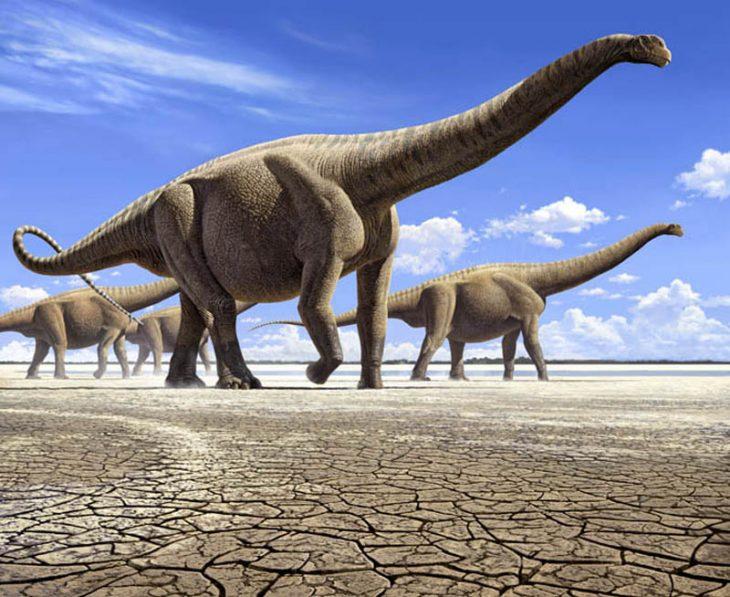Динозавр амфицелия: описание вида
