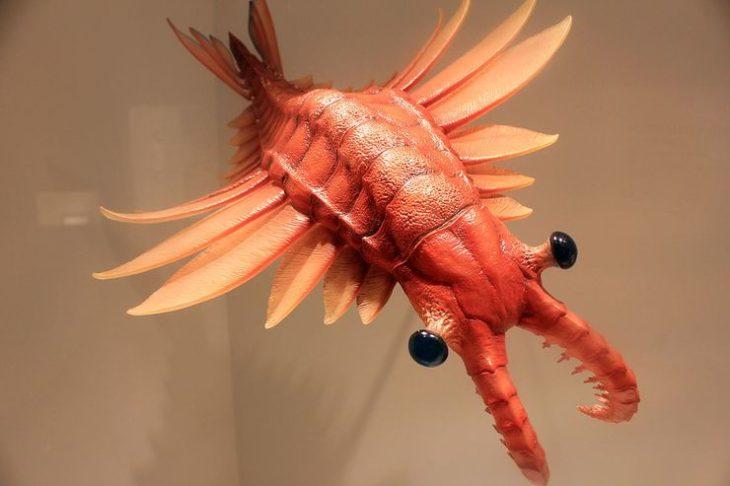 Аномалокарис — гигантская доисторическая креветка