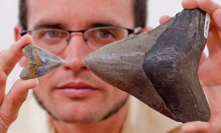 Самому старому найденному мегалодону 28 миллионов лет