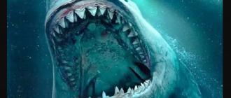 Зубы мегалодона больше, чем зубы любых известных видов акул на планете