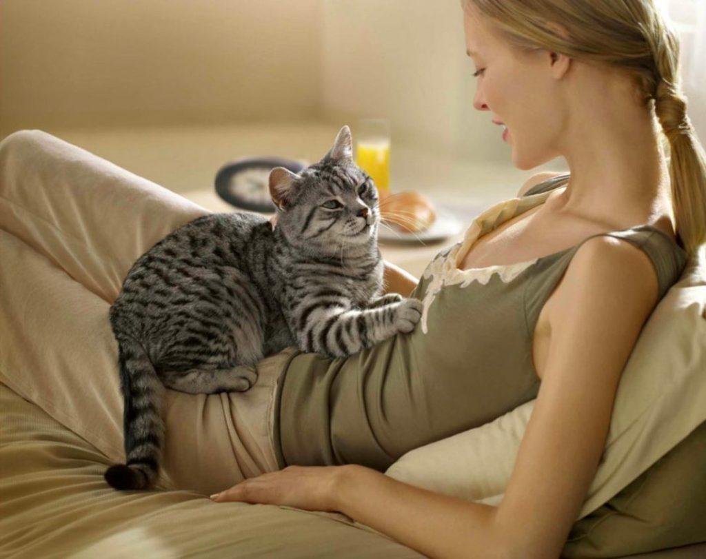 Молочный шаг у кошек