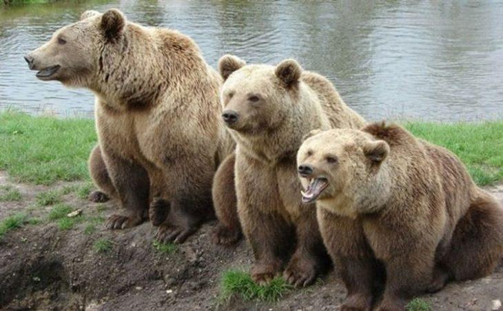 Где живут медведи?