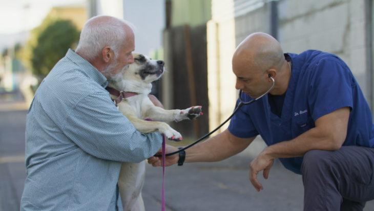Чем занимается ветеринар