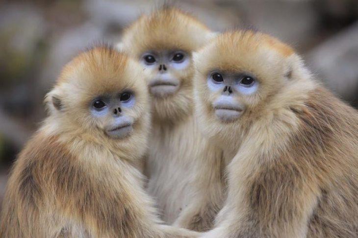 На грани исчезновения: топ-15 редких животных планеты