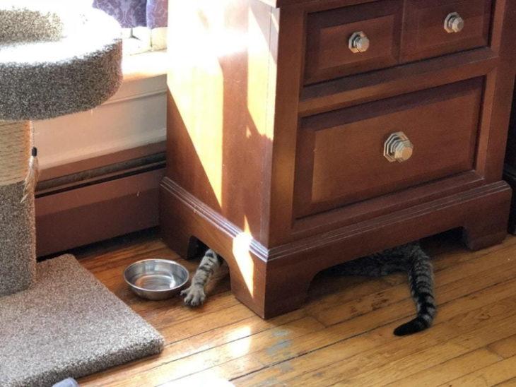 Уморительные коты, в которых что-то сломалось
