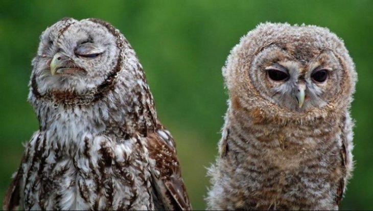 30 животных, которые всем видом показывают, что обиделись